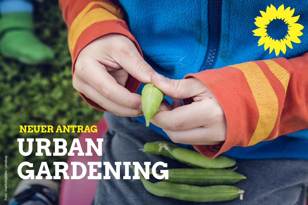 Urban Gardening in Harburg entwickeln und fördern