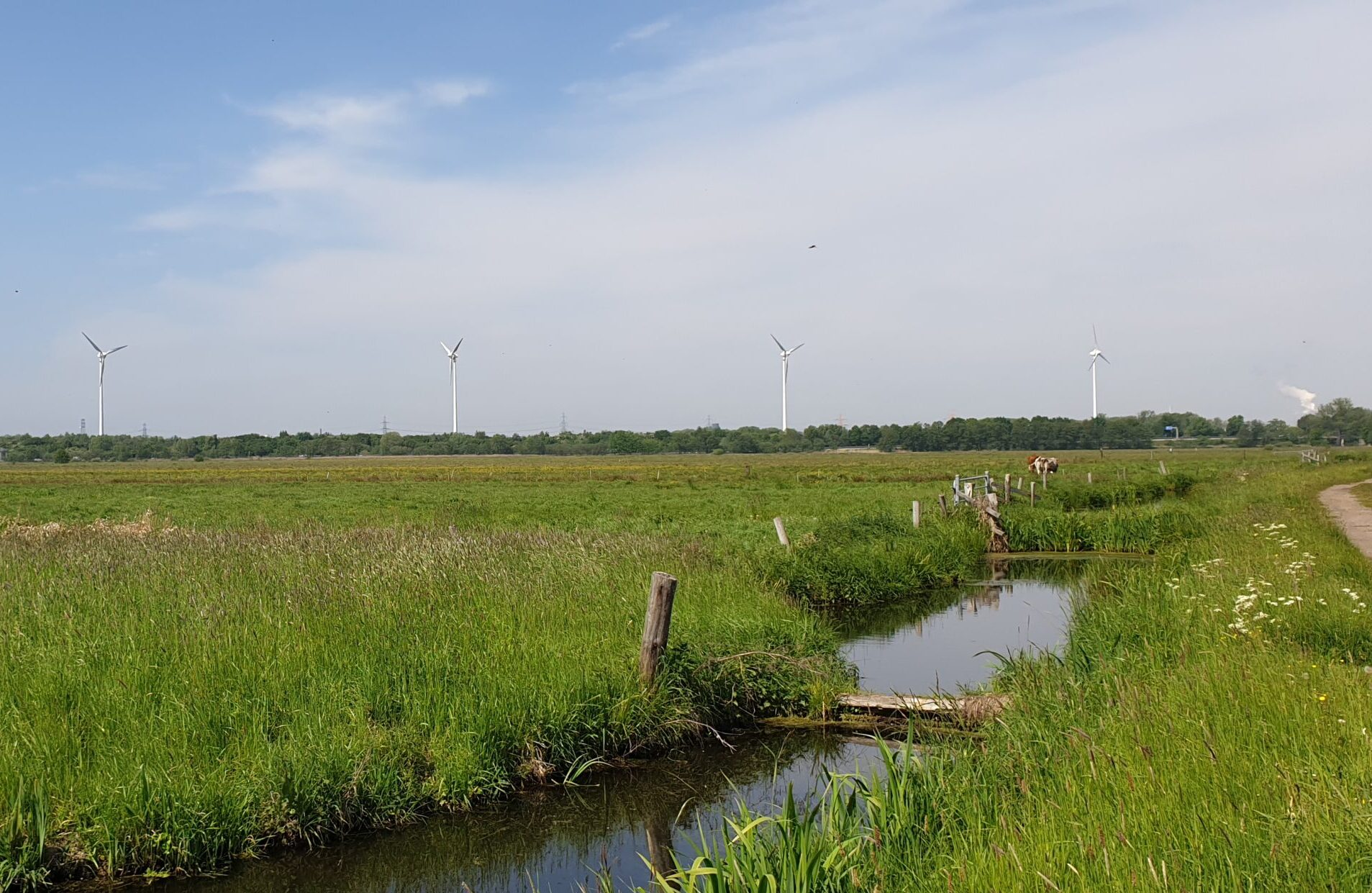 Naturschutzgebiet Neuländer Moorwiesen
